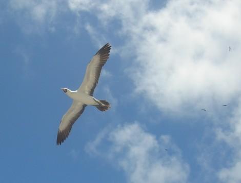 A seabird. Coincidence? Photo taken the amazing photographer JM Casey.